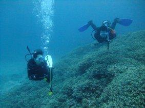 STEP-7:水中での浮力調整|パラオ ダイビング|パシフィックエコツアー