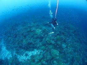 STEP-4:潜降|パラオ ダイビング|パシフィックエコツアー