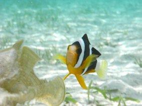 体験ダイビング(マラカル島1ダイビング)|パラオ オプショナルツアー|パシフィックエコツアー